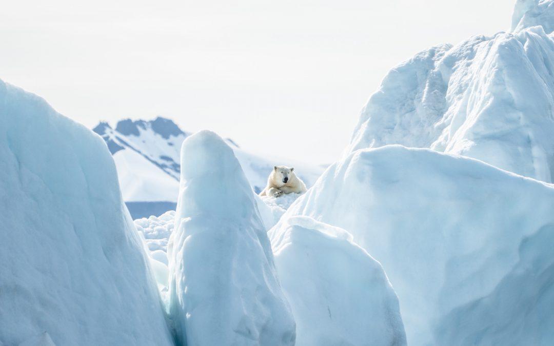 Svalbard in motoslitta